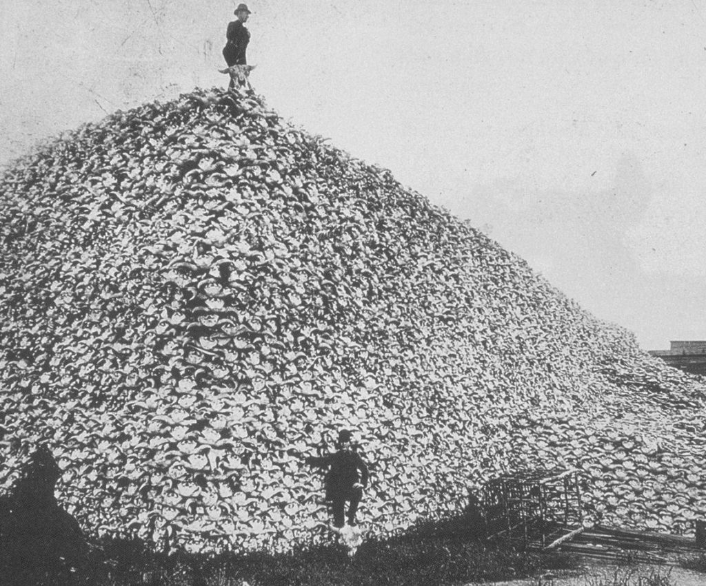 кладбище бизонов